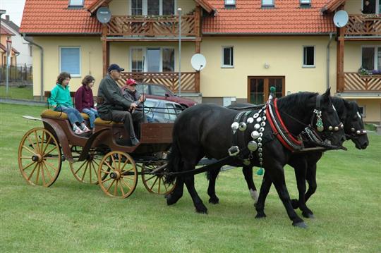 Koně s kočárem pro svezení všech návštěvníků výročí - přijely ze Zdislavic